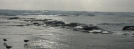 Spring storm at Muriwai Beach