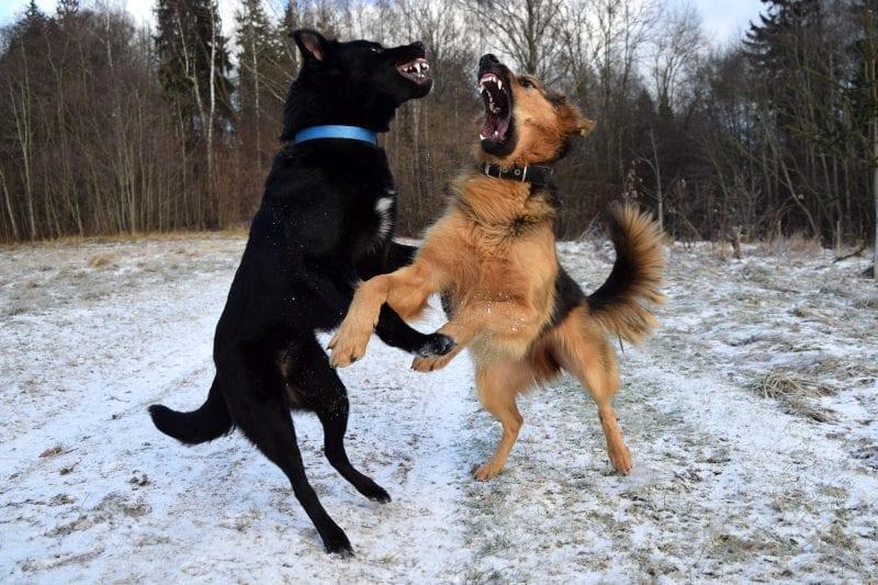win win dog training